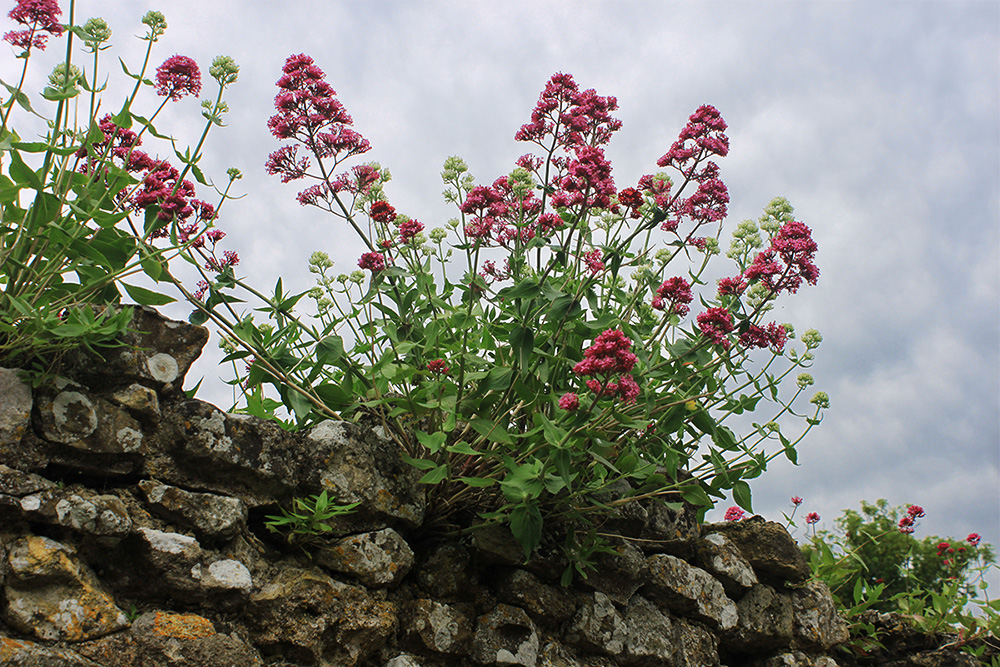 Isle of Wight Carisbrooke Castle 10