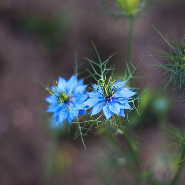 """""""Ich habe heute ein paar Blumen nicht gepflückt, um dir ihr Leben zu schenken."""" // Christian Morgenstern"""