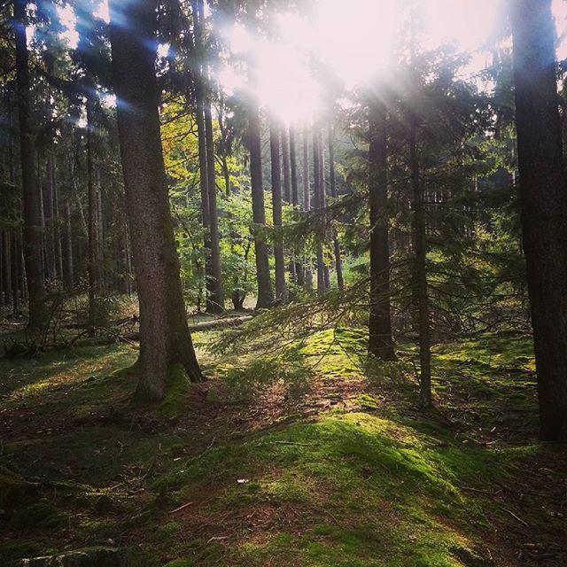 Ein Herbsttag am #limes im #taunus geht zu Ende.