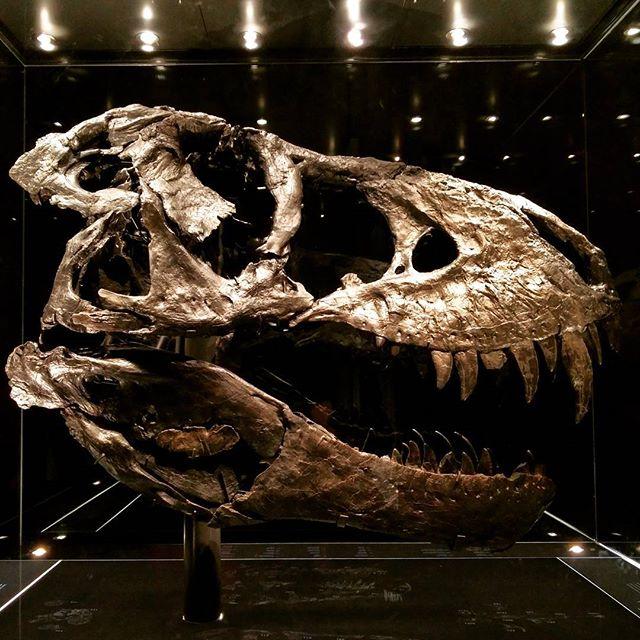 Besuch bei Tristan Otto.  Learning of the day: Auch ein T. Rex hat mal Zahnschmerzen.