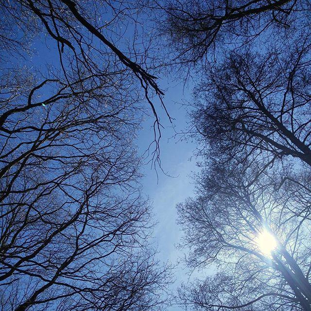 Blue sky, sun and trees ️