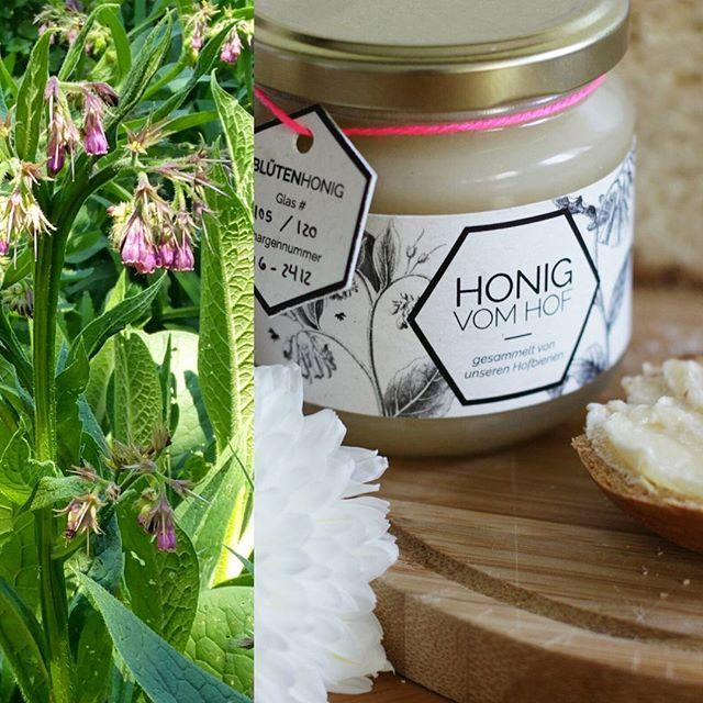 Ich habe die Blume von meinem Honig im Apothekergarten gefunden! Offenbar lieben Bienen Beinwell!  #einherzfuerbienen #biohofmay #honig #lecker #schoen